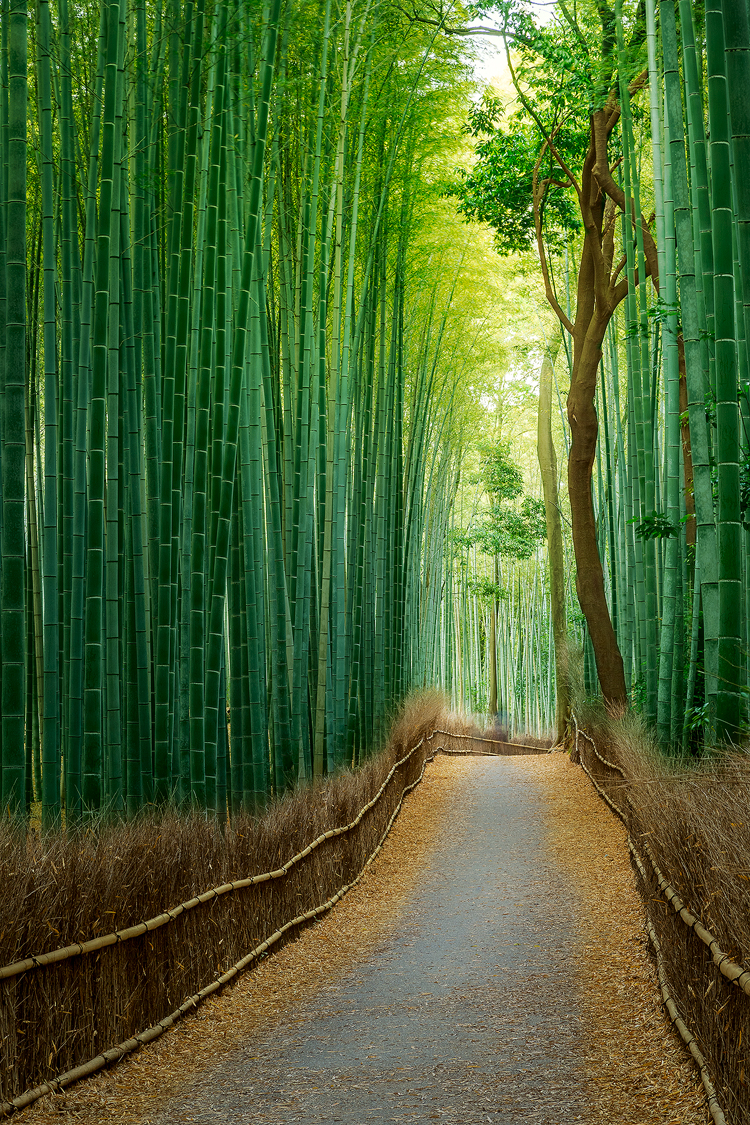 Like walking through a fairytale at the Bamboo Forest in Kyoto, Japan