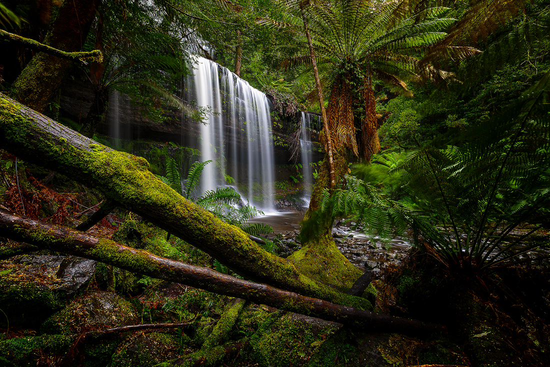 The lush landscape of Russell Falls in Tasmania