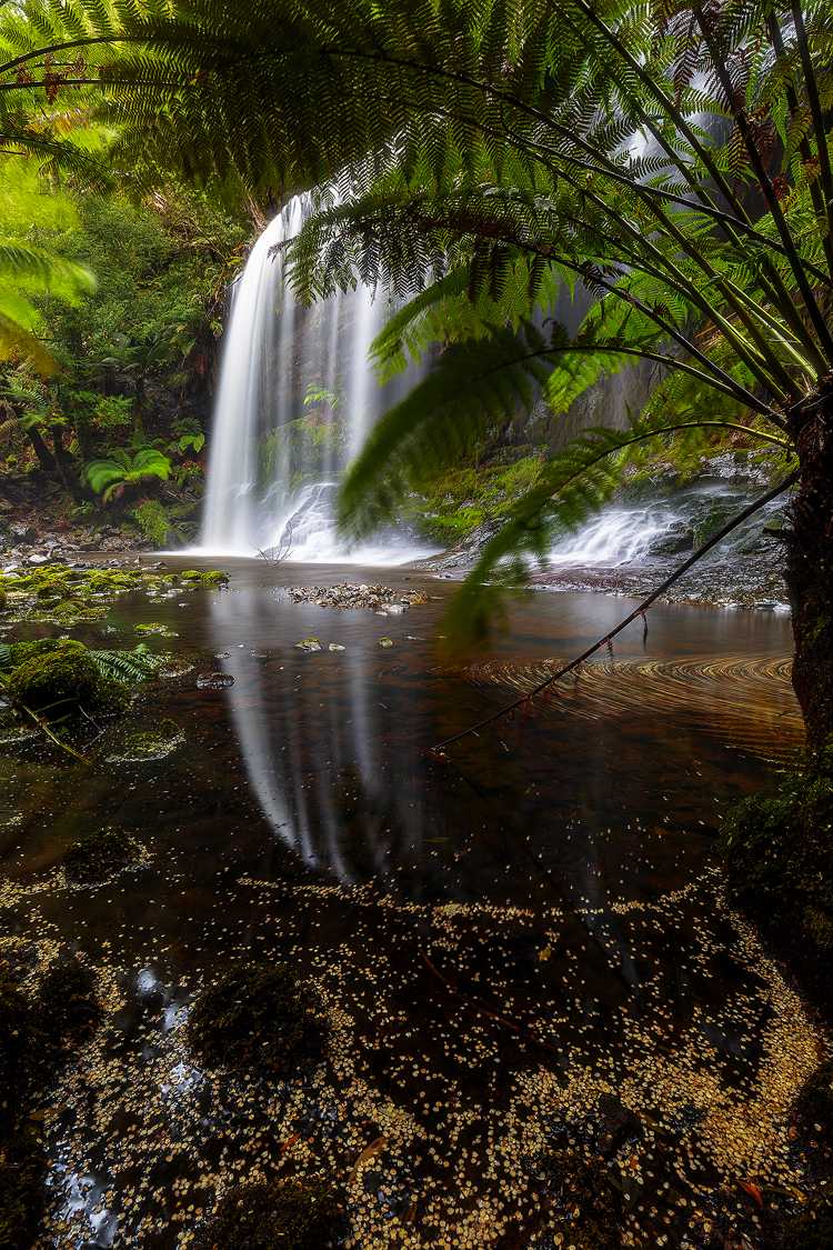 A shy view of Russell Falls in Tasmania