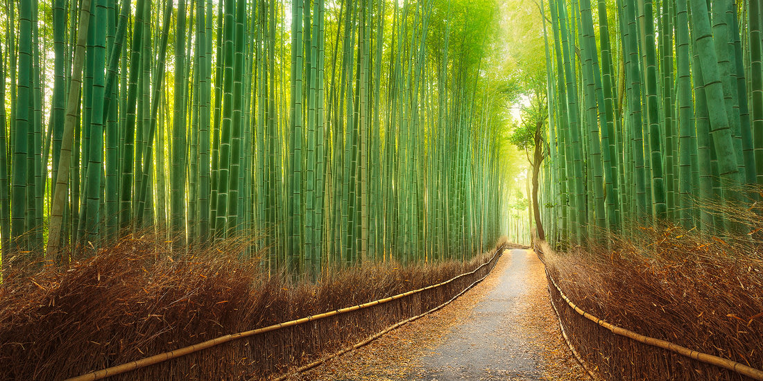 A path through the lush bamboo forest in Kyoto